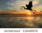 Silhouette Of Blue Heron At Th...