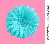 Turquoise Gerbera Flower...