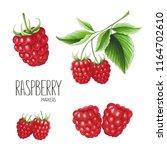 raspberry on white background.... | Shutterstock . vector #1164702610