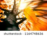 autumn wind blowing yellow... | Shutterstock . vector #1164748636
