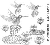 doodle floral and hummingbird... | Shutterstock .eps vector #1164752446