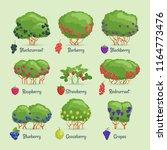 garden shrubs set. cartoon... | Shutterstock .eps vector #1164773476