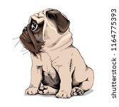 Adorable Beige Puppy Pug. Hand...