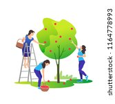 young women picking apples on a ... | Shutterstock .eps vector #1164778993