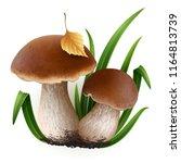 vector illustration   porcini... | Shutterstock .eps vector #1164813739