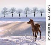 Deer Doe And  Snowy Landscape