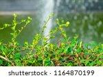 environment concepts  carmona...   Shutterstock . vector #1164870199