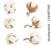 cotton plant over white... | Shutterstock . vector #116487340