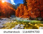 beautiful colorful autumn... | Shutterstock . vector #1164894700
