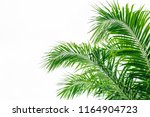 palm leaf isolated on white | Shutterstock . vector #1164904723