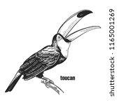 toucan. hand drawing of bird...   Shutterstock .eps vector #1165001269