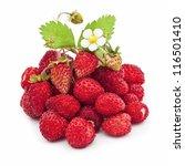 Fresh Wild Strawberries...