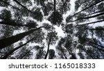pine forest mangunan | Shutterstock . vector #1165018333