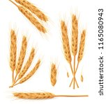 realistic bunch of wheat ears... | Shutterstock .eps vector #1165080943