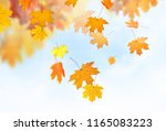 autumn falling leaves background | Shutterstock . vector #1165083223