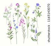 summer flowers floral set | Shutterstock .eps vector #1165143070