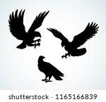big pride hieraaetus... | Shutterstock .eps vector #1165166839