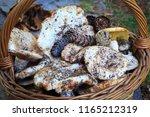 full basket of autumn mushrooms....   Shutterstock . vector #1165212319
