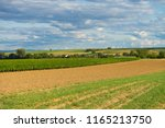 Fields And Vineyards  In...