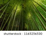 bamboo grove  bamboo forest at... | Shutterstock . vector #1165256530