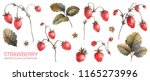 strawberry illustration.... | Shutterstock . vector #1165273996