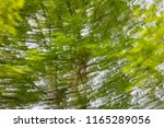 blurred background  tree and...