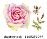 red watercolor  roses  isolated ... | Shutterstock . vector #1165291099