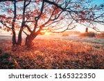 autumn sunrise on meadow. sun... | Shutterstock . vector #1165322350