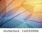 colorful leaves background.... | Shutterstock . vector #1165333006