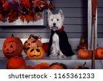 funny west highland white...   Shutterstock . vector #1165361233