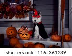 funny west highland white... | Shutterstock . vector #1165361239