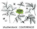 sketch floral botany collection.... | Shutterstock .eps vector #1165380610