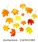 autumn leaves isolated on white ... | Shutterstock . vector #1165412383