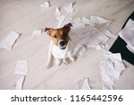 Small photo of Bad dog shred important documents. Naughty pets at home. Bad puppy looking up on his owner and waiting for punishment