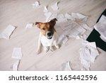 bad dog shred important... | Shutterstock . vector #1165442596