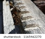 beautiful butterfly sitting at... | Shutterstock . vector #1165462270