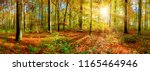 panorama of an autumnal forest... | Shutterstock . vector #1165464946