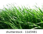 Green Grass Against White - stock photo