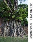buddha head in tree  wat maha... | Shutterstock . vector #1165502740