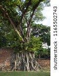 buddha head in tree  wat maha... | Shutterstock . vector #1165502743
