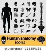 human anatomy black   white... | Shutterstock .eps vector #116554198