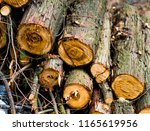 firewood for the winter  stacks ... | Shutterstock . vector #1165619956