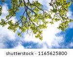 Branch Tree Leaf Tree Sky - Fine Art prints