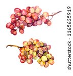 grape bunches   red and yellow. ... | Shutterstock . vector #1165635919