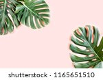 tropical palm leaves monstera... | Shutterstock . vector #1165651510