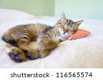 Stock photo small kitty with red pillow 116565574