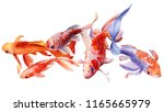 beautiful fishs koi on white... | Shutterstock . vector #1165665979