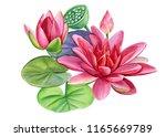 beautiful water flowers  pink... | Shutterstock . vector #1165669789
