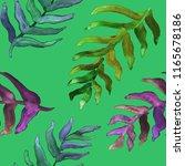 watercolor hand drawn summer... | Shutterstock . vector #1165678186