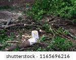 a felled tree around a branch | Shutterstock . vector #1165696216